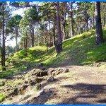 Auf einem Forstweg im Gemeindegebiet von Fuencaliente de La Palma,Wandern