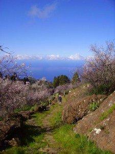 Mandelblüte-La-Palma-Wandern-Alter-Camino