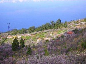 Mandelblüte-Las-Tricias-La-Palma-Wandern