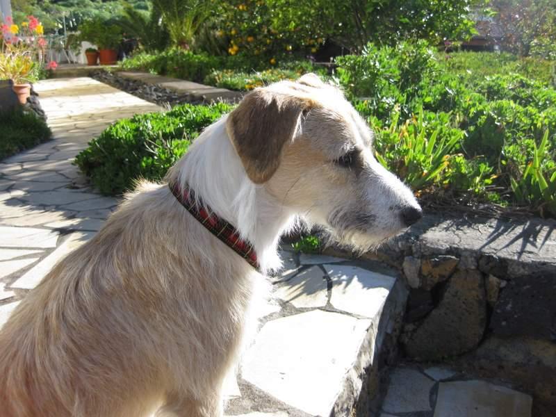 Unser Hund Phili