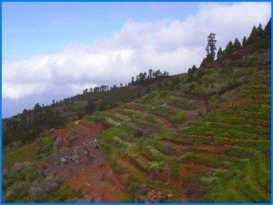 Weinberge-bei-Tinizara-La-Palma-Wandern