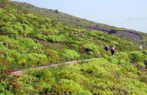 Wandern auf dem Wasserkanal bei Mazo, La Palma