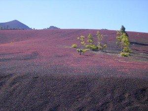 Blühendes Llanos de Jable, La Palma