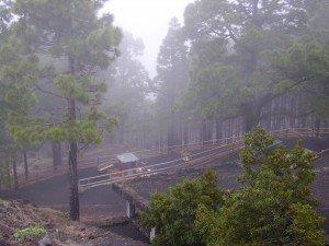 Fuente de Los Roques im Nebel, La Palma