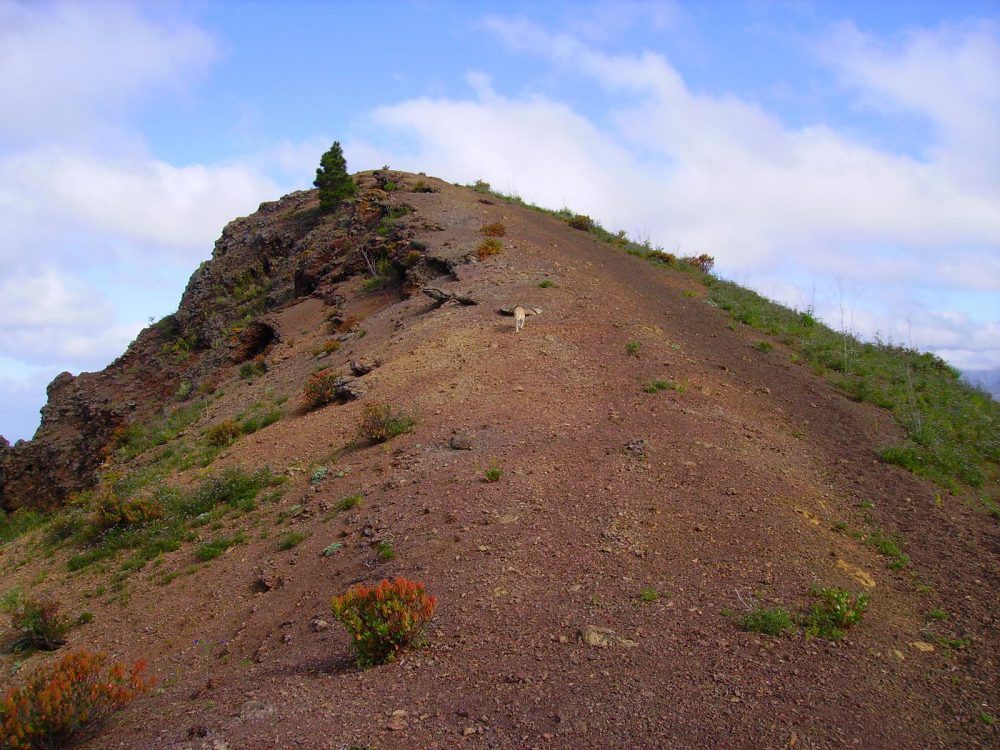 Pfad zum Gipfel der Montaña Rojada. La Palma.