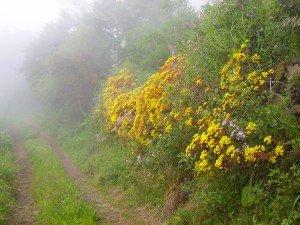 Im Nebelwald, La Palma