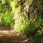 Schattige Forststraße, La Palma, Wandern,
