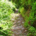 Beim Abstieg auf dem LP-5,1, La Palma, Wandern,