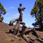 Naturkunst, La Palma, Wandern,