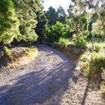 Wanderweg,steil nach oben in den Kiefernwald, La Palma,Wandern,