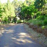 Nach 15 Min. rechts auf Asphaltweg, La Palma, Wandern,