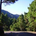 Unterhalb der Cumbre Nueva wandern. La Palma, Wandern,