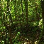 Im Lorbeerurwald Cubo de La Galga, La Palma, Wandern,