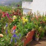 Bauerngärten auf La Palma, Wandern,