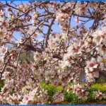 Mandelblüte im Frühjahr auf La Palma, Wandern,