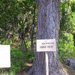 Pared Vieja, La Palma, Wandern,