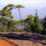 Der Weg führt am Barranco Izcagua entlang,La Palma, Wandern,