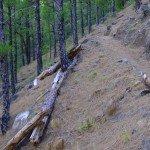Oft führt der Wanderweg durch Kiefernwald, La Palma, Wandern,
