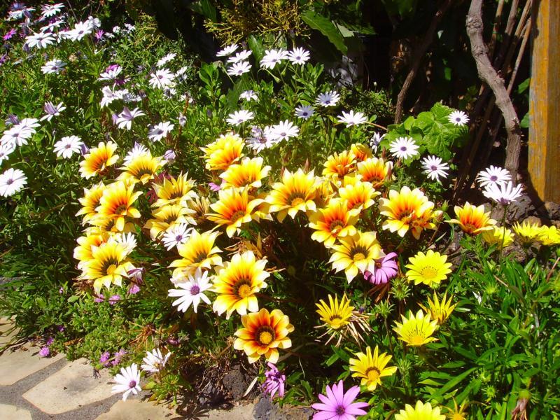 La Palma,Gartenbilder,Wandern,