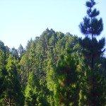 Montaña del Palo,La Palma, Wandern