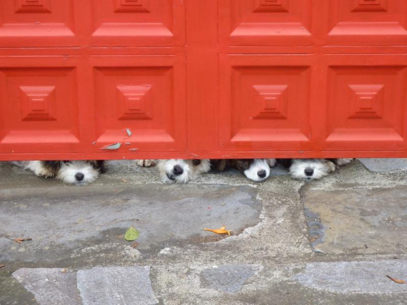 Hunde am Tor,La Palma, Wandern