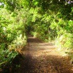 La Palma, Wandern, Im Buschwald,