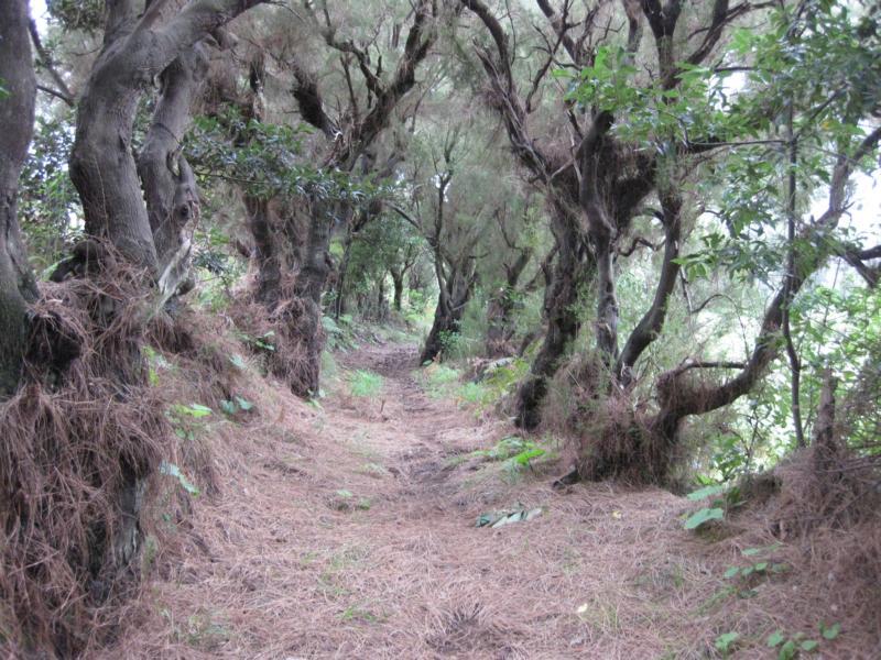 La Palma, Wandern, Hohlweg
