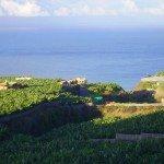Ausblick über Bananenplantagen, La Palma, Wandern