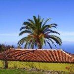 Kanarische Palme.La Palma,Wandern,
