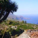 Palmita, Drachenbaum,Nordküste,La Palma,Wandern
