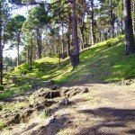 Im Kiefernwald oberhalb Los Canarios La Palma, Wandern