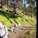 Auf dem GR 130 La Palma, Wandern