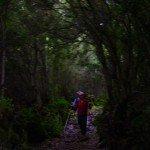 Buschwald-La-Palma-Wandern.