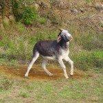 La-Palma-Wandern-Esel