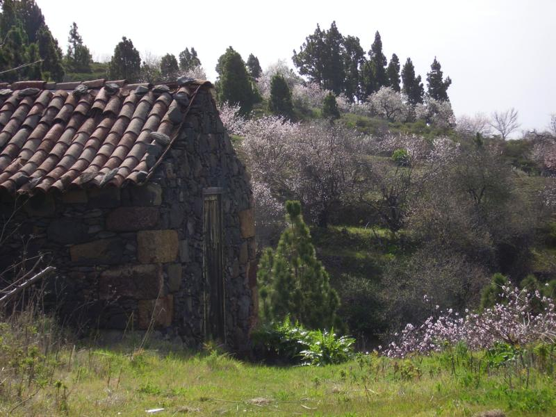 Mandelblüte-auf-La-Palma-Winter-2008-La-Palma-Wandern