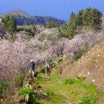 La-Palma-Wandern-Alter-Camino-Tricias