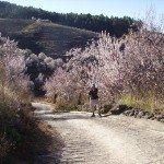 La-Palma-Wandern-Auf-dem-Wanderweg-PR-LP-10