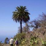La-Palma-Wandern-Kanriesche-Palme