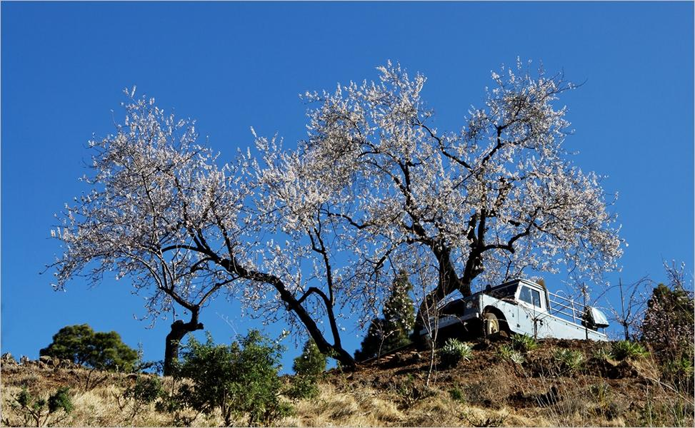 La Palma-Wandern-Mandelblüte-Garafia