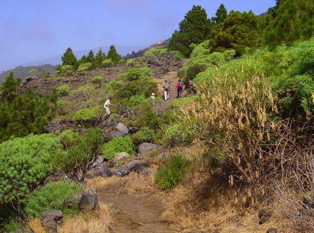 La Palma Wandern-auf-schönem-Pfad