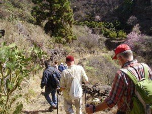 La-Palma-Wandern-Auf-einem-Camino-Real