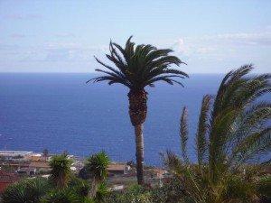 La-Palma-Wandern-Kanarische-Palme