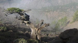 La Palma-Wandern-Wanderung vom Pico de la Nieves zum Refugio de la Punta de los Roques