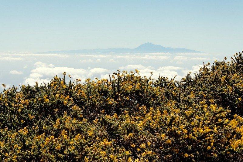 La Palma Klima, Wanderung bei guter Weitsicht im Juni