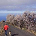 La-Palma-Wanderung-Mandelblüte-Puntagorda.
