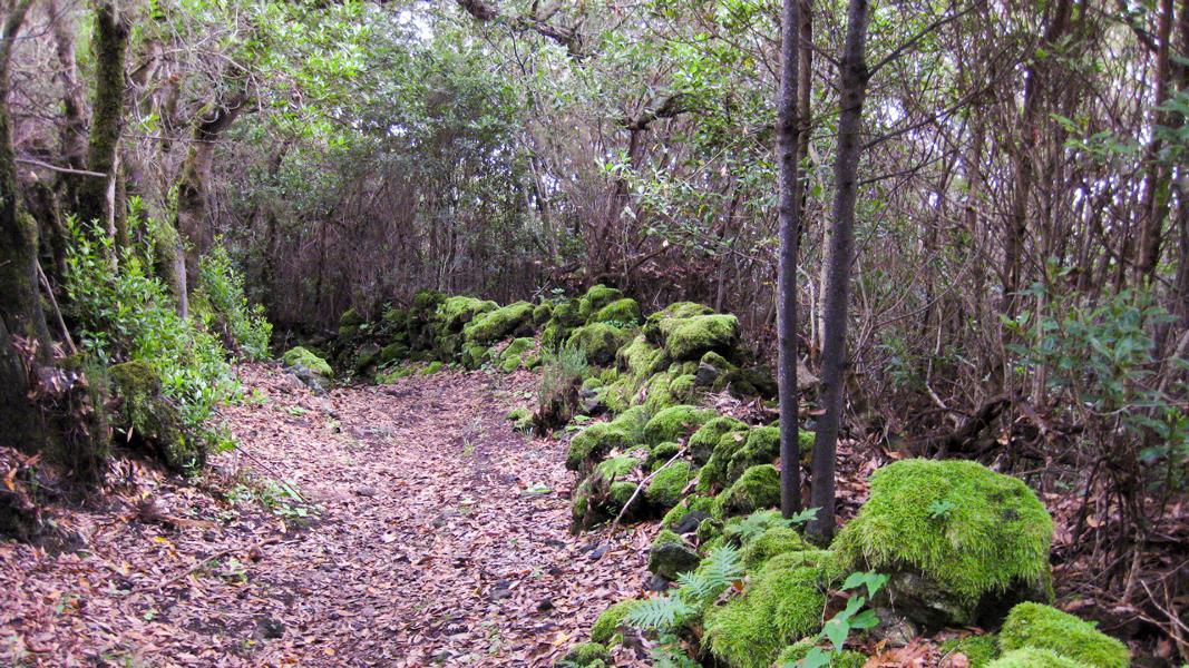 Wanderung-La Palma-Camino La Faya