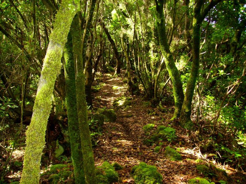 Wandern-La-Palma-Buschwald