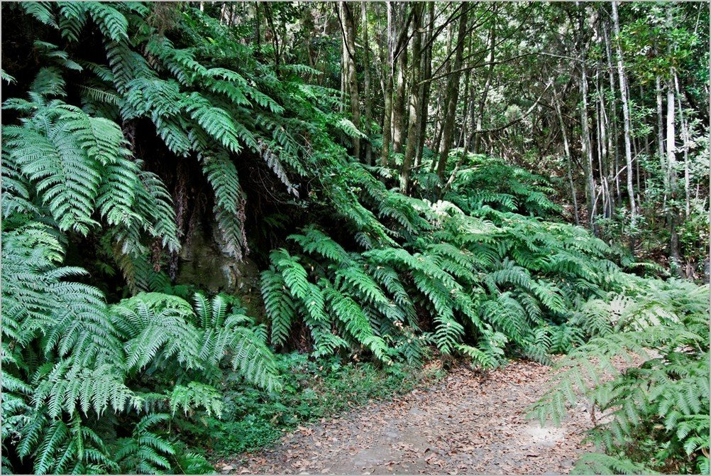 La Palma-Wanderungen-Auf dem Wanderweg PR-LP-4