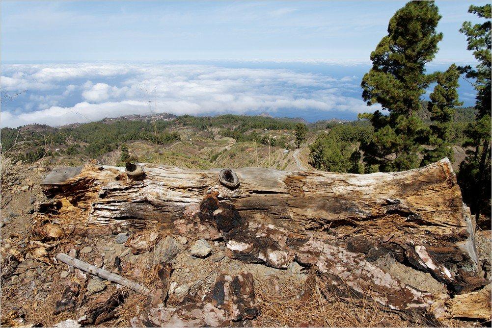 La Palma-Wanderung-Puntagorda-Ralf Köhler