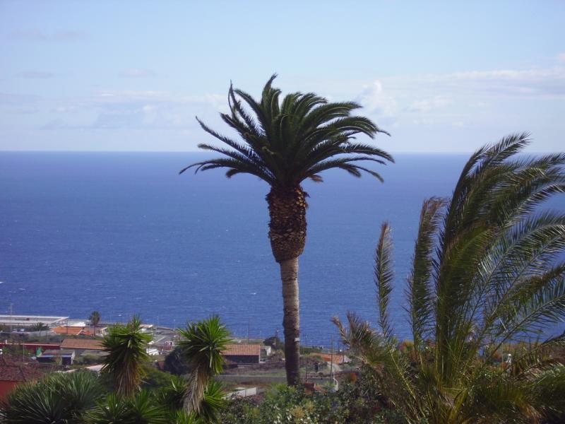 La-Palma-Kanarische-Palme